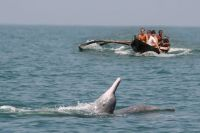 Dolphin Trips_1